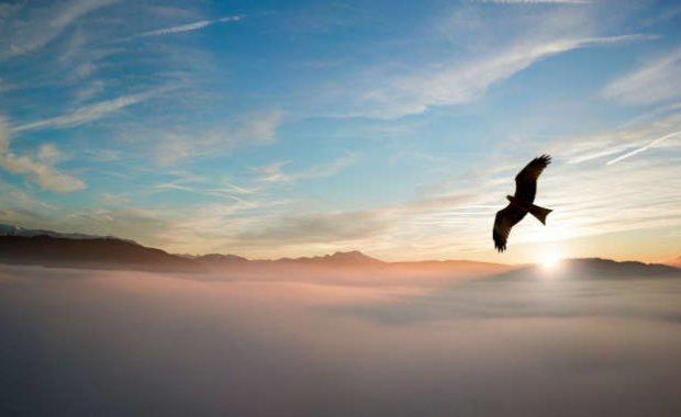 Águila volando libremente y oteando el todo desde arriba del cielo