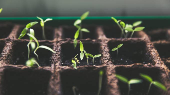 Plantas creciendo en un vivero que utilizamos como símil del desarrollo personal en el trabajo donde del crecimiento personal lograremos el desarrollo en equipo